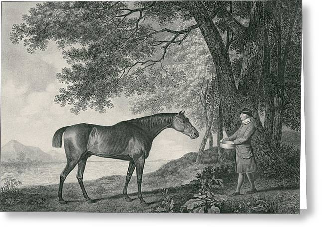 Sharke Greeting Card by George Stubbs