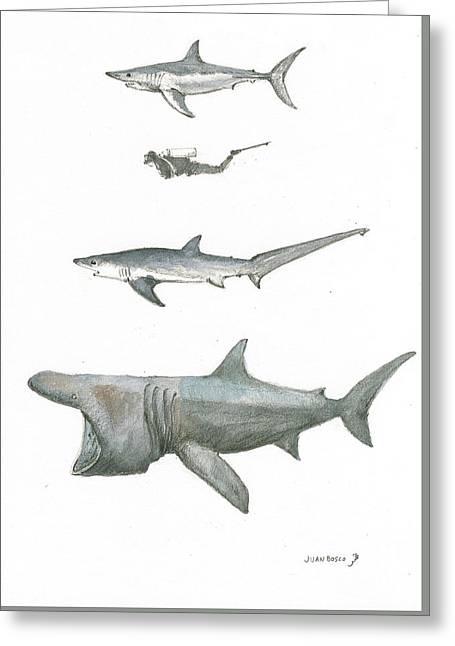 Sharks In The Deep Ocean Greeting Card by Juan Bosco