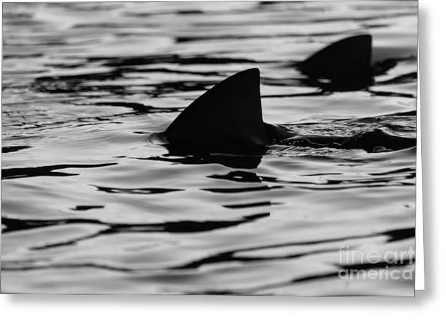 Sharks Greeting Card by Massimo Lama