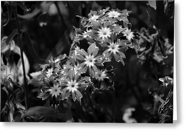 Sharp Petal Flowers Greeting Card