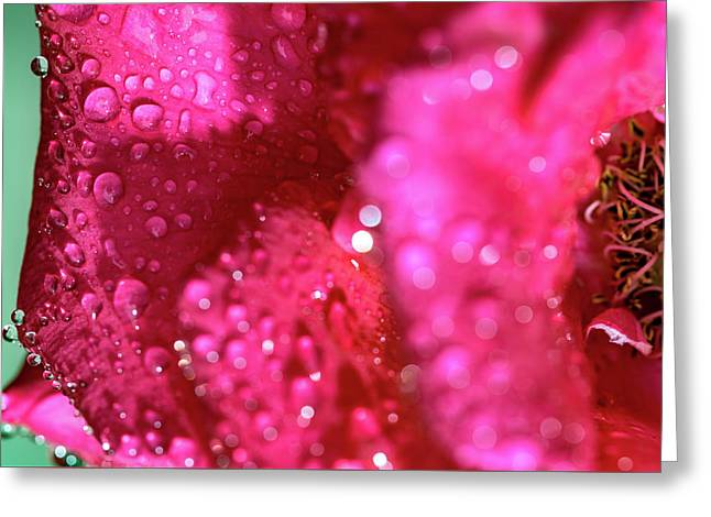 Greeting Card featuring the photograph Sharp Wet Rose by T Brian Jones