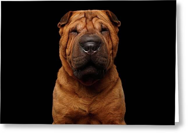Sharpei Dog Isolated On Black Background Greeting Card