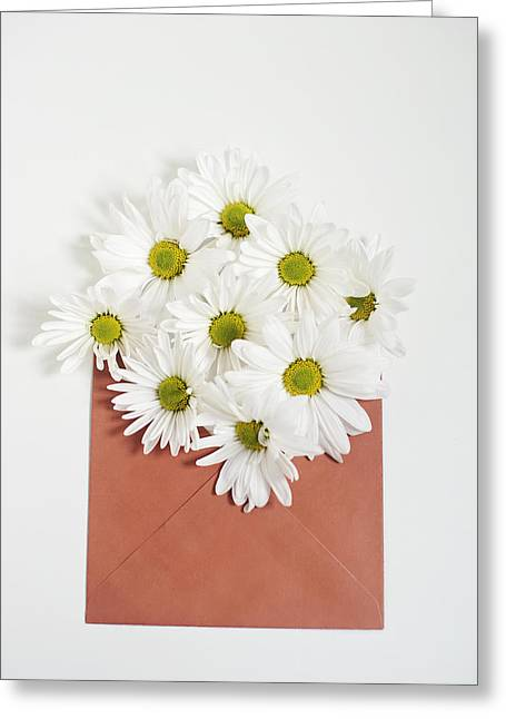 Shasta Daisies In Orange Envelope Greeting Card