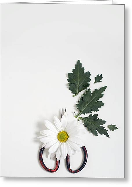 Shasta Daisy Still Life Greeting Card