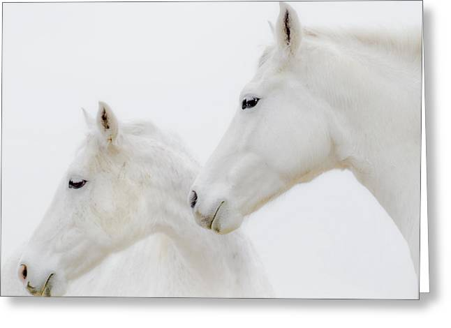 She Dreamed Of White Horses Greeting Card by Ron  McGinnis