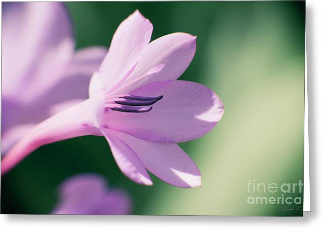 Greeting Card featuring the photograph She Listens Like Spring by Linda Lees