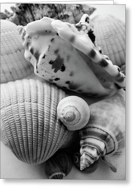She Sells Seashells Greeting Card