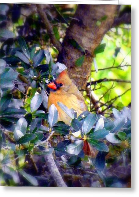 Orange Beak Greeting Cards - She Waits Greeting Card by Karen Wiles