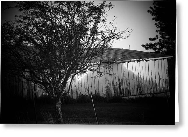 Shed  And Tree Greeting Card by Michael L Kimble