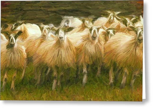 Sheep At Hadrian's Wall Greeting Card
