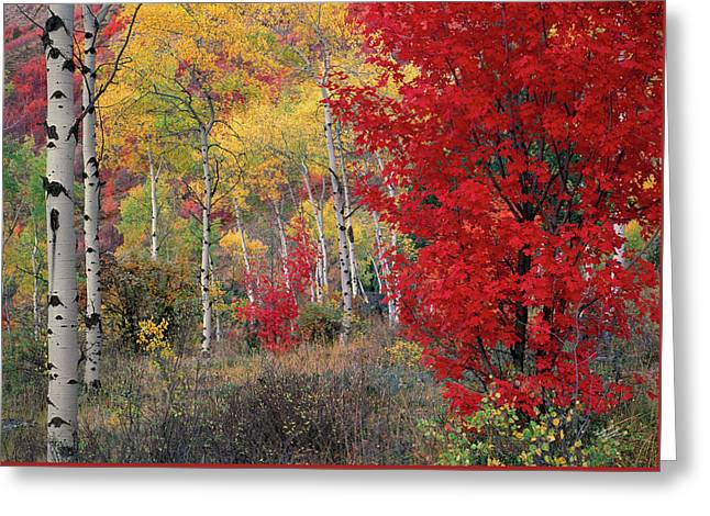Sheep Canyon In Autumn Greeting Card by Leland D Howard