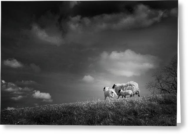 Sheep Photographs Greeting Cards - Sheep Clouds Greeting Card by Dorit Fuhg
