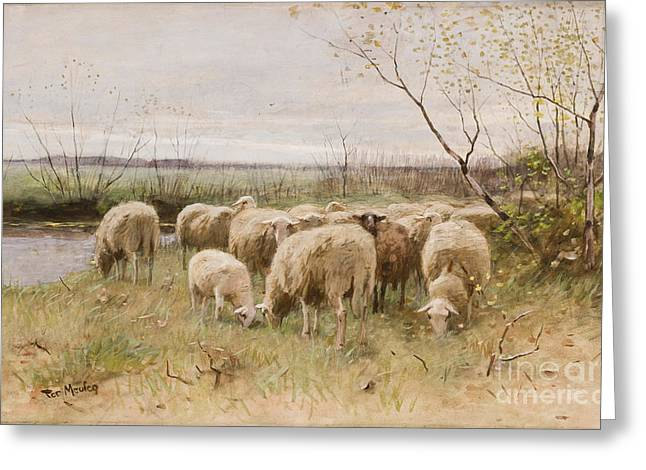 Grazing Greeting Cards - Sheep Greeting Card by Francois Pieter ter Meulen