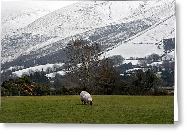Sheep Grazing Atthe Galtees  Ireland's Tallest Inland Mountains Greeting Card by Pierre Leclerc Photography
