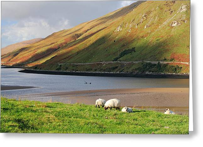 Sheep Grazing In Connemara Ireland Greeting Card by Pierre Leclerc Photography