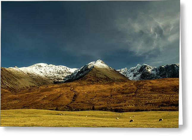 Sheep Grazing In Scotland Greeting Card by Steve Taylor
