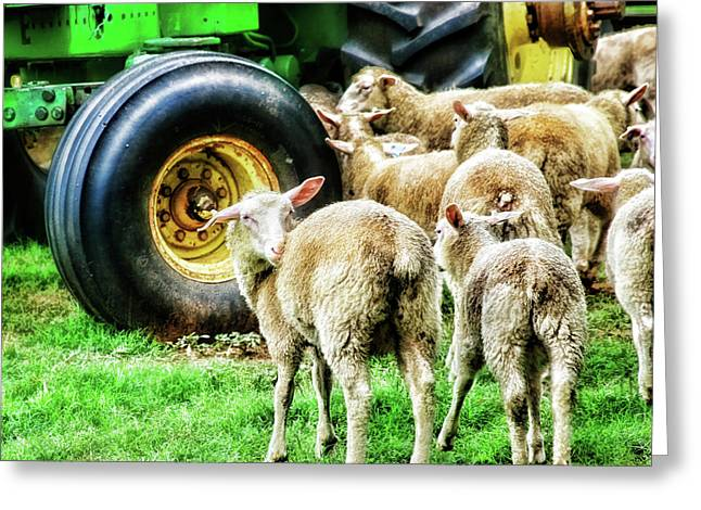Greeting Card featuring the photograph Sheep Guards by Toni Hopper