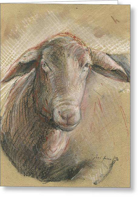 Sheep Head Greeting Card