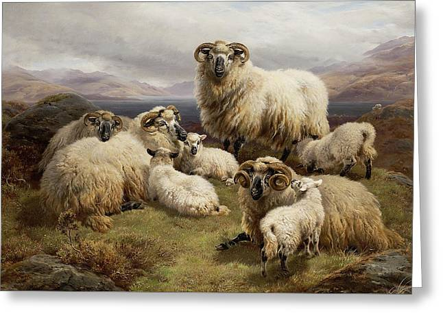 Sheep In A Highland Landscape Greeting Card