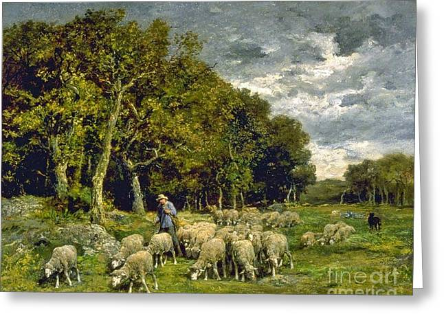Sheep In A Pasture Greeting Card by MotionAge Designs