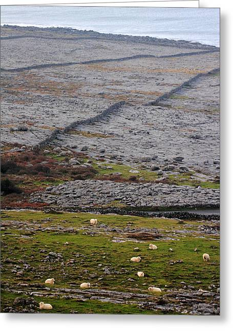 Sheep In The Burren Ireland Greeting Card by Pierre Leclerc Photography