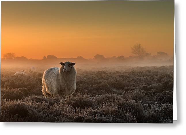 Sheep In The Mist Greeting Card by Rijko Ebens