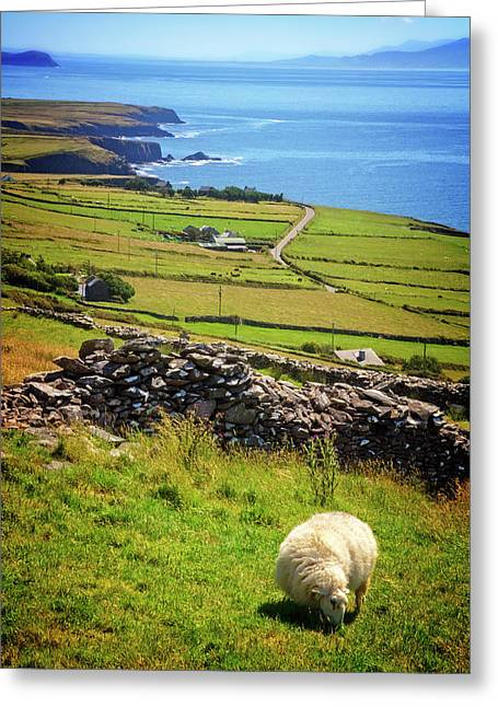 Sheep On The Mountainside Greeting Card