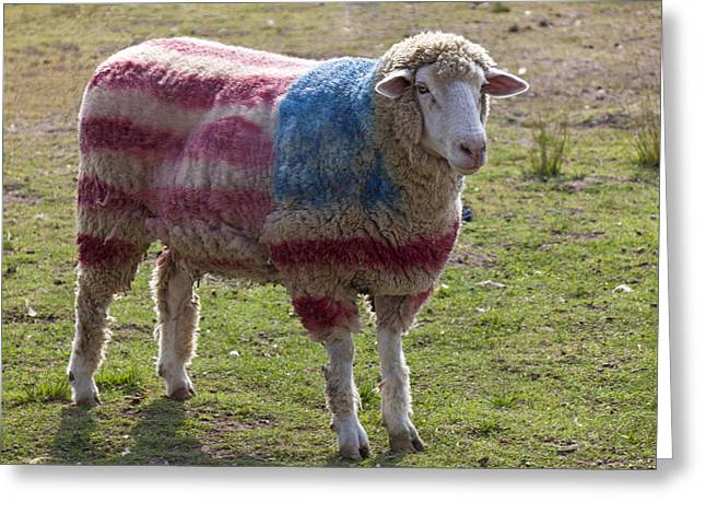 Dyed Greeting Cards - Sheep with American flag Greeting Card by Garry Gay