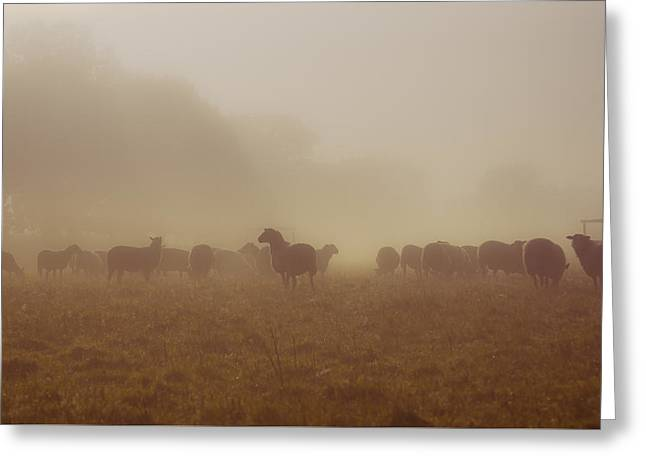 Sheeps In The Mist Greeting Card by Chris Fletcher