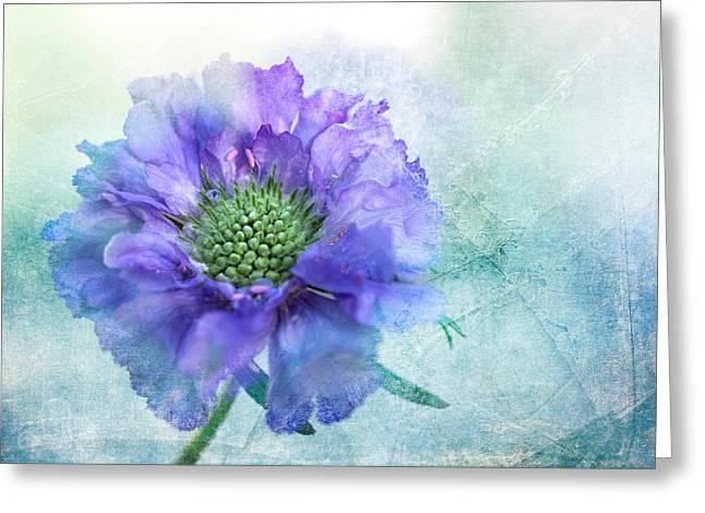 Sheer Lilac Greeting Card