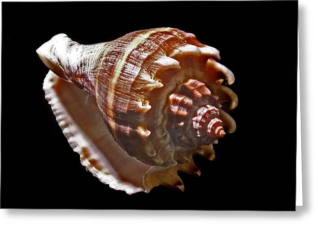 Shell 8-6 Greeting Card by Skip Willits