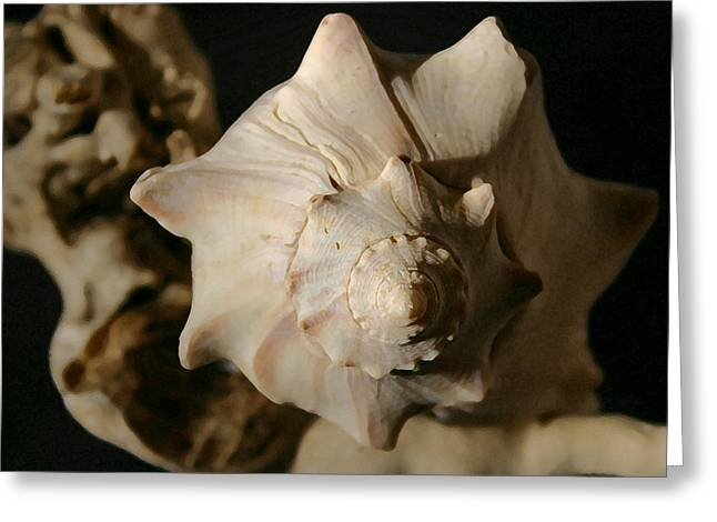 Shell And Driftwood Greeting Card by Mary Haber