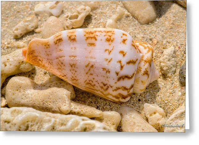 Shell Greeting Card by Christopher Holmes