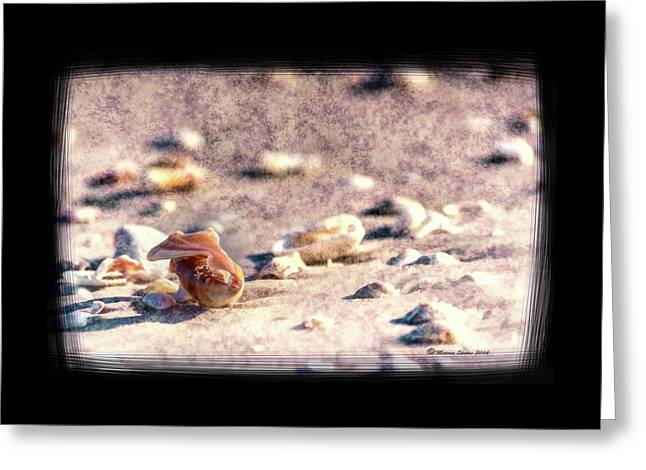 Shell Delight Greeting Card by Marvin Spates
