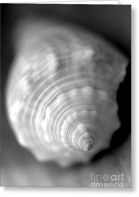 Shell Dream Greeting Card