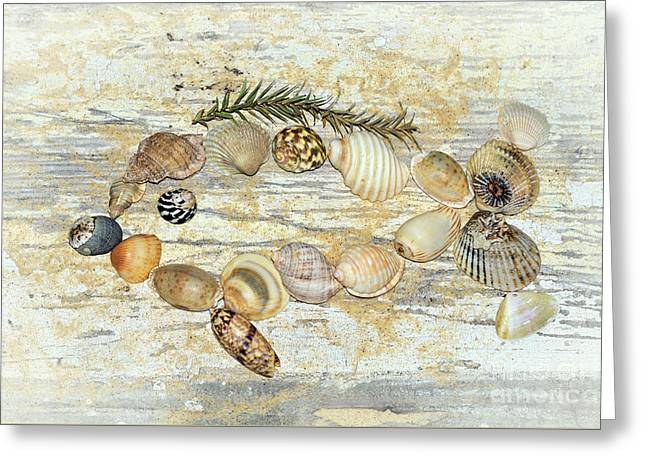 Greeting Card featuring the photograph Shell Fish By Kaye Menner by Kaye Menner