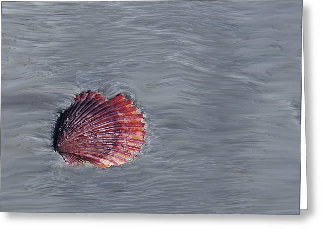 Shell Imprint Greeting Card