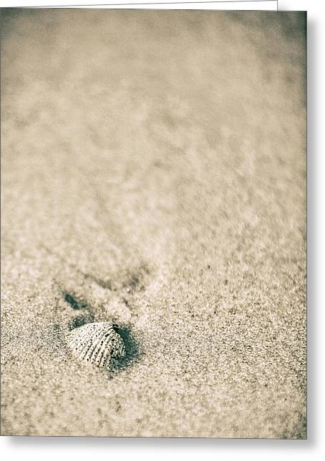 Greeting Card featuring the photograph Shell On Beach Alabama  by John McGraw