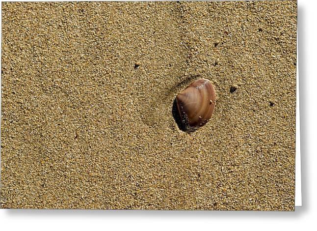 Shell On Beach Greeting Card by Steven Ralser