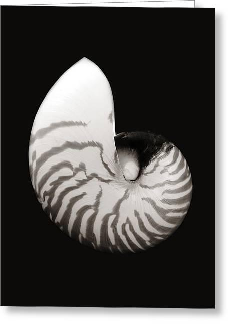 Shell On Black Iv Greeting Card by Bill Brennan - Printscapes