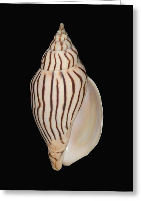 Shell Pattern - Bw Greeting Card by Bill Brennan - Printscapes