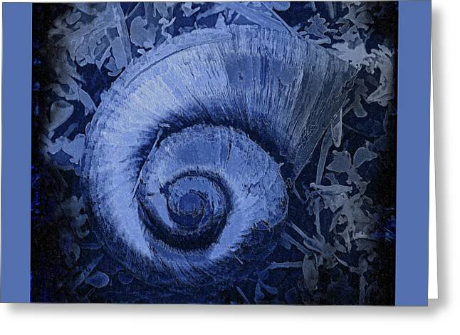 Shell Series 3 Greeting Card
