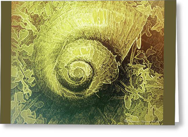 Shell Series 4 Greeting Card