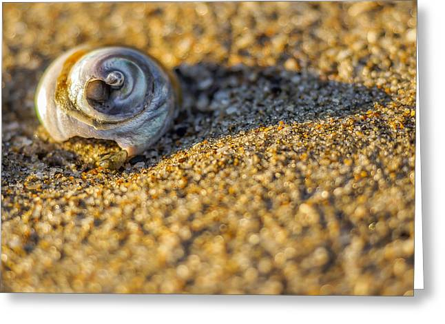 Shell Greeting Card by Steve Spiliotopoulos