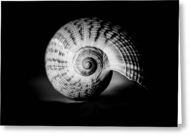 Shell Study No. 001 Greeting Card
