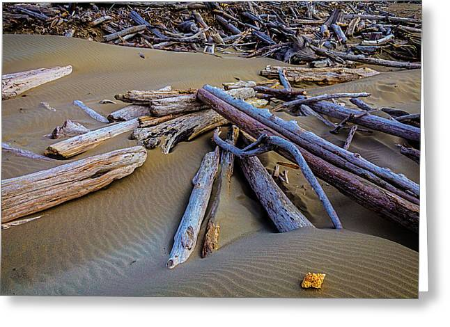 Shell With Driftwood Greeting Card by Garry Gay