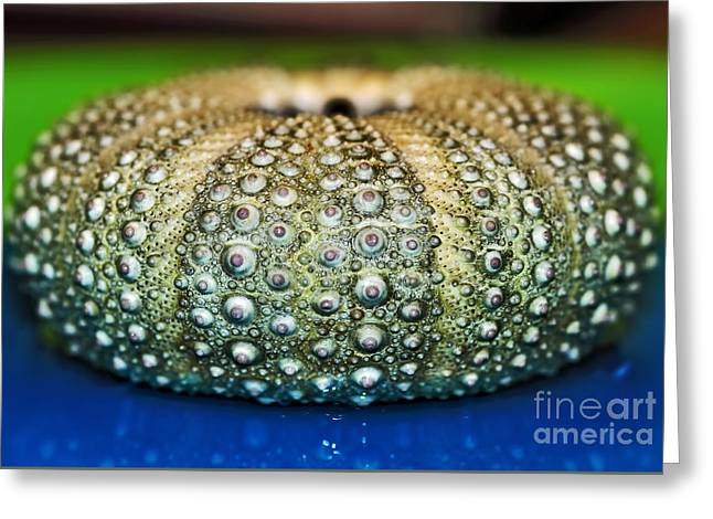 Shell With Pimples Greeting Card by Kaye Menner
