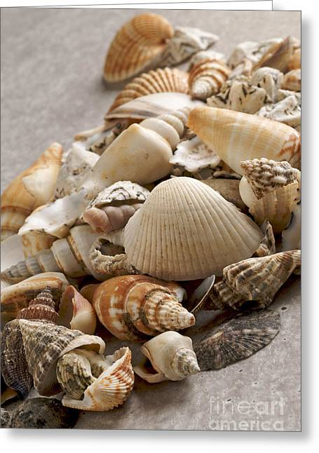 Shellfish Shells Greeting Card by Bernard Jaubert