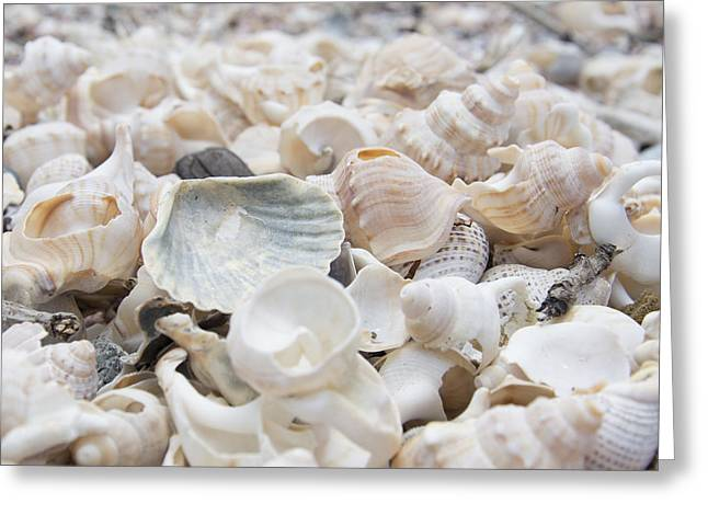 Shells 2 Greeting Card