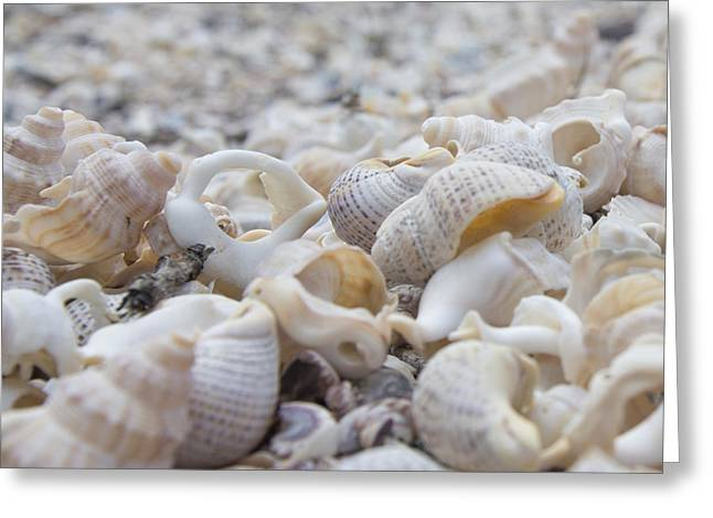 Shells 3 Greeting Card